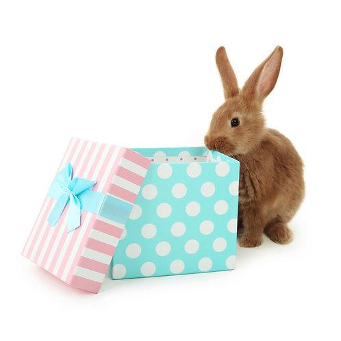 "The Fluffy Box                     ""Spring"""