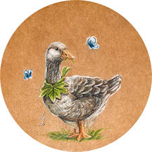 duck drawing lucie schrimpf