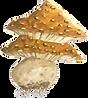 champignon illustration lucie schrimpf.p