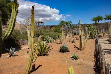 Jardin de Cactus Mini Hollywood