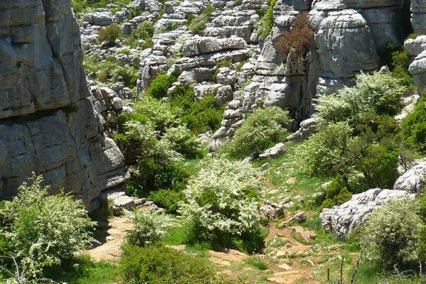 Route karstique d'El Torcal