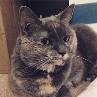 Cat-Cat (Vail).JPG