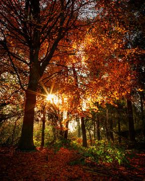 Illuminated Leaves