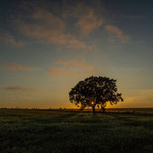 Sun Star and the Lone Tree