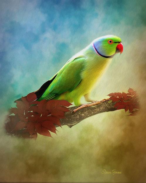 Ring Necked Parakeet Digital Oil Painting