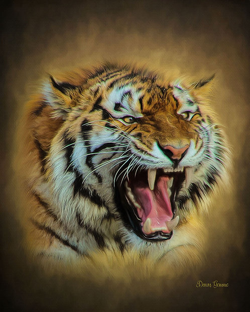 Snarling Tiger Wildlife Digital Oils Painting