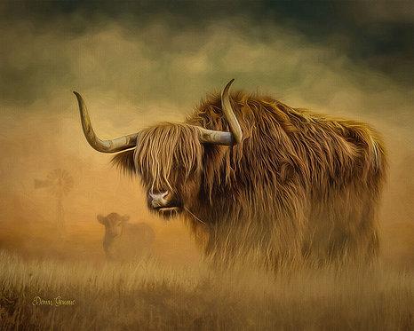 Scottish Highlander Bull Digital Oil Painting