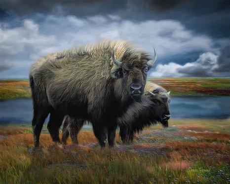 Autumn Plains Bison Digital Oil Wildlife Painting