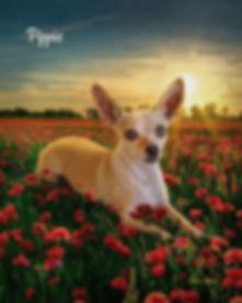 Custom Digital Oil Pet Dog Portrait