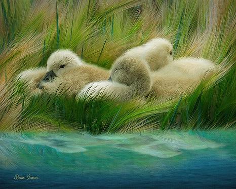 Tiny Goslings At Waters Edge Digital Oil Wildlife Painting