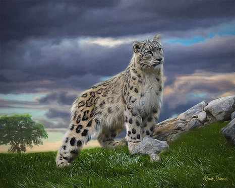Snow Leopard Wildlife Digital Oil Painting