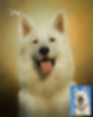 Custom Dog -  Cat - Horse Pet Digital Oi