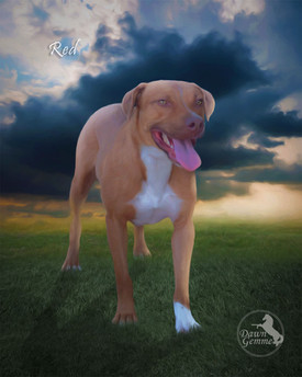 Stormchaser Custom Pet Portrait Painting