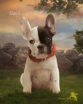 Peach Sunrise Custom Pet Portrait Painting