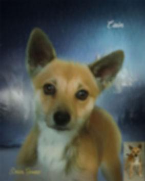 Custom Canvas Digital Oils Pet Portrait
