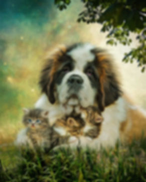 Turquoise  Dream Custom Pet Portrait Pai