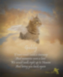 Angel Wings Personalized Pet Memorial Po