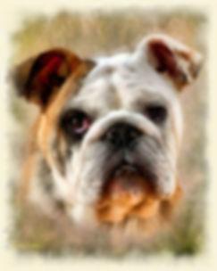 Custom Digital Watercolor Pet Portrait P