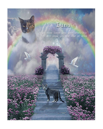 Rainbow Bridge Cat Memorial Portrait