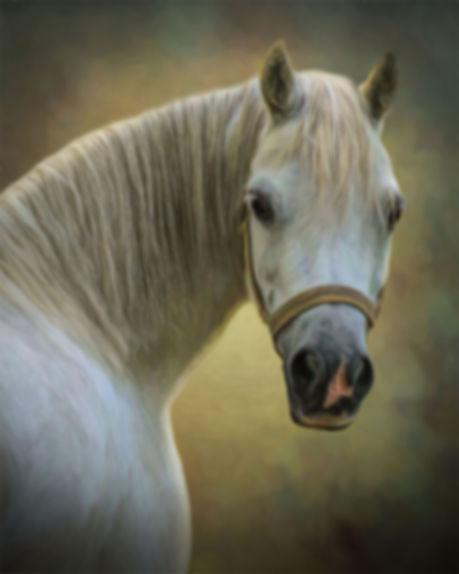 Slate Swirl Backdrop Custom Horse Portra