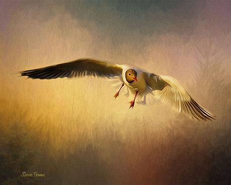 Homeward Bound Laughing Gull Digital Oil Wildlife Painting