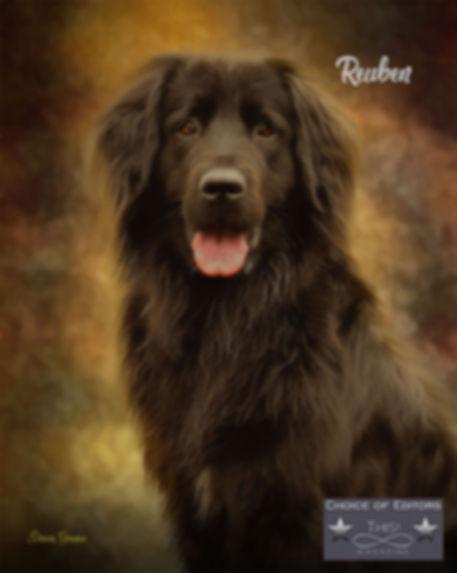 Color Splash Custom Studio Dog Portrait