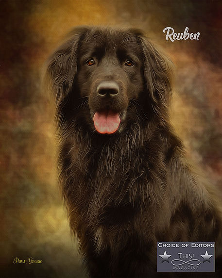 Color Splash Custom Studio Dog Portrait