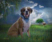 Sunbreak Wheat Field Custom Pet Portrait