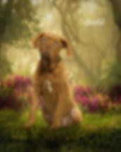 Sunlit Flora Custom Pet Portrait Paintin