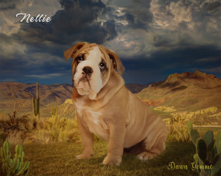 Desert Storm Custom Pet Portrait Painting