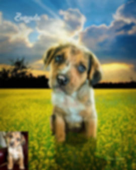 Sunlit Field Flowers Custom Oil Pet Pain