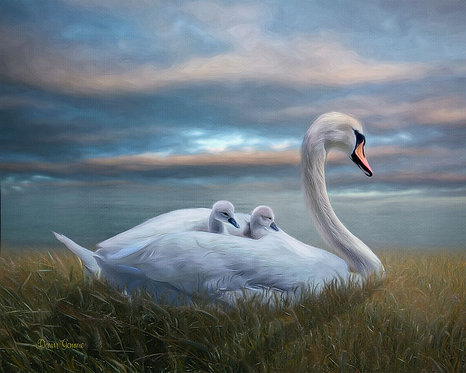 Graceful Swan and Baby Cygnets Wildlife Digital Oil Painting