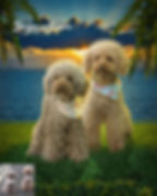 Sunset Fire Custom Digital Oil Pet Paint