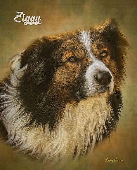 Custom Dog Digital Oil Portrait Painting