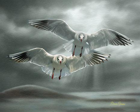 Wandering Seagulls Wildlife Digital Oil Painting