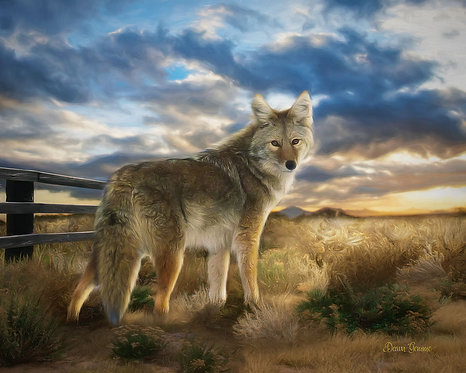 Desert Coyote Sunset Digital Oil Wildlife Painting