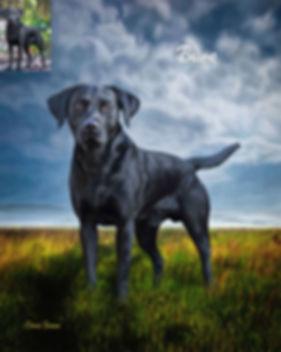 Seaside Custom Pet Portrait Painting