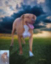 Stormchaser Custom Pet Portrait Painting