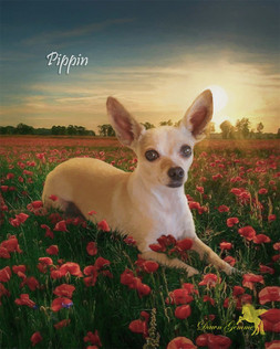 Sea of Red Poppies Custom Pet Portrait Painting