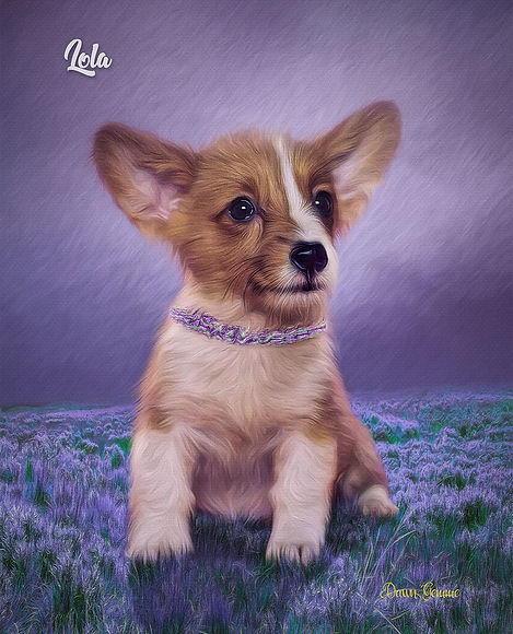 Lavender Dream Custom Digital Oils Pet P