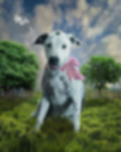 Custom Summer Dreamy Field Pet Digital O