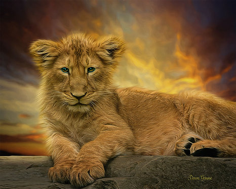 Future King Lion Cub Wildlife Digital Oil Painting