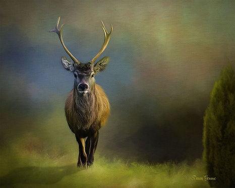Lone Deer Stag Digital Oil Wildlife Painting