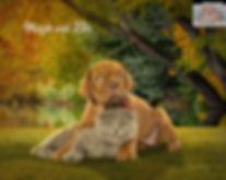 Autumn Pond Custom Oil Pet Painting