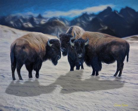 Bison Trio In Snow Wildlife Digital Oil Painting