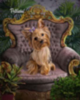 Studio Formal Custom Oils Pet Painting