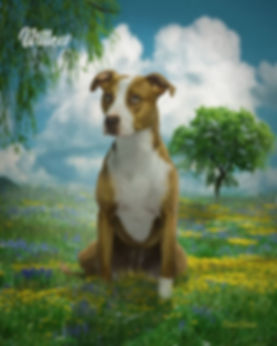 Dreamy Field Custom Dog Portrait Paintin
