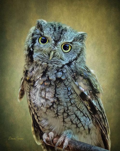 Soulful Eyes Screech Owl Digital Oil Wildlife Painting