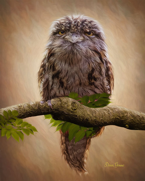 Tawny Frogmouth Wildlife Digital Oil Painting
