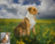 Summer Place Custom Digital Oil Pet Pain